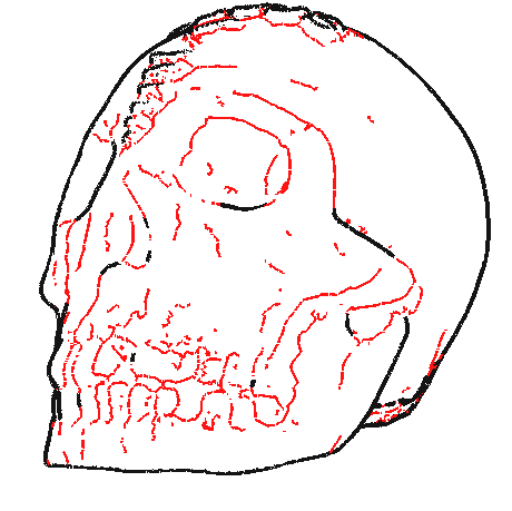 Skull Suggestive Contours