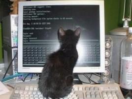 CatComputer_0